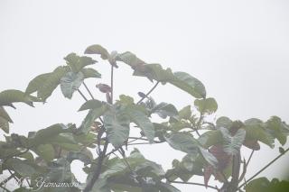 霧がひどくて