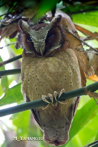 owl0719