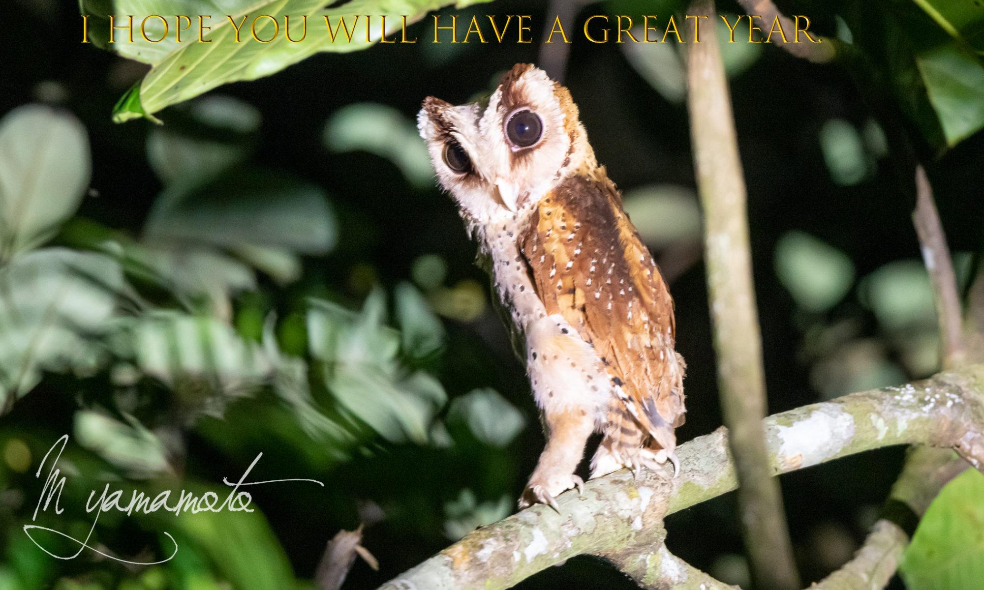 Sri Lanka Bay-Owl (年賀)